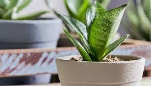 pflanzen im schlafzimmer die top 6 für gesunde nachtruhe