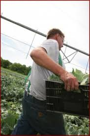 Wenninghoff Pumpkin Patch Omaha by Why You Should Buy Local Wenninghoff U0027s Farmwenninghoff U0027s Farm