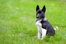 Low Shedding Big Dogs by And Thirst In Dogs Symptoms Causes Diagnosis