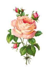 Vintage Flower Clipart Rose 2