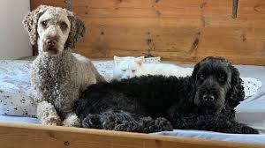darf mein hund mit mir im bett schlafen martin rütter