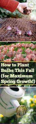 how to plant bulbs this fall for maximum growth bless