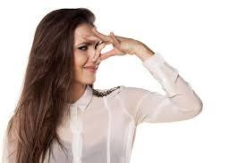 odeur de pipi de sur canapé comment se débarrasser de l odeur d urine de