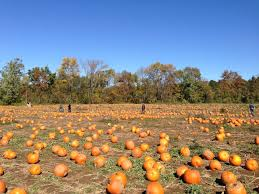Pumpkin Patch Santa Rosa by The 10 Best Pumpkin Patches In Florida Florida Food U0026 Farm