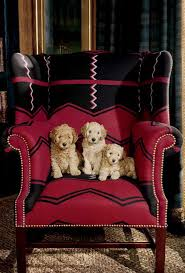 Puppies Cozy Up In A Ralph Lauren Home Wingback Chair In Vintage ... Faux Suede Pet Fniture Covers For Sofas Loveseats And Chairs Comfort Research Big Joe Bagimals Dawson The Dog Bean Bag Armchair Shih Tzu Lap On The Stock Photo Image 350298 Dog Cat Chamomile Amazoncom Sure Fit Quilted Throw Sofa Slipcover Taupe King Sitting His Throne 1018169 Shutterstock Antique Asian Chair Chinese Export Wood Carved Dragon Lion Foo Me My Dogcat Fold Out Bed With Protector Available In Dogs Amazoncouk Boxer Destroyed A Leather Armchair Alone At Home Damaged Hound Buttonback Occasional Loaf
