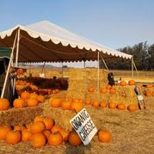 Pumpkin Patch Santa Rosa by The Great Peter Pumpkin Patch 67 Photos U0026 30 Reviews Farmers