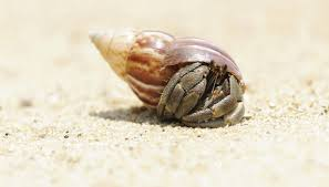 Do Hermit Crabs Shed Legs by What Type Of Habitat Do Crabs Live In Sciencing