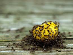 10 Most Effective Ways To Get Rid Ants From Your Home & Garden