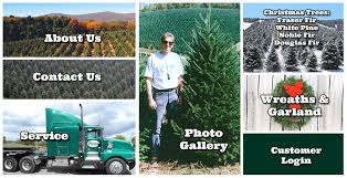 Fraser Fir Christmas Trees Nc by Sexton Christmas Tree Farm Home