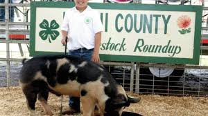 4-H Livestock Show & Sale Set For June 15-16 - West Hawaii Today 11 Aloha Airin Ohana Magazln Hawaii Where Guestbook 62017 The 33rd Annual Helen M Cassidy Memorial Juried Art Show 7 Verified Reviews Of Bridle Suite Bookingcom Mayjune 2019 By Ke Ola Magazine Issuu North Shore Oahu Ocean Front And Vacation Rentals Beachfront Wy Wolf Delisted Vironmentalists Howl Lawsuit New Route Submitted Paradise The Pacific Page 2 Notes From Kohala Jeans Things Home Facebook Rocking Chair Ranch Waimea Hi Untappd Leonora Prince