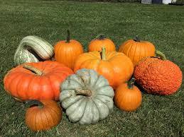 Pumpkin Patch Auburn Al by October 20th Emily U0027s Musings Auburn First United Methodist Church