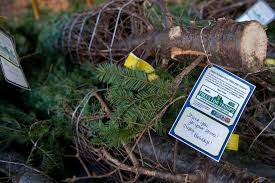 Eustis Christmas Tree Farm by Trees For Troops Kicking Off The Holiday Season U003e Joint Base