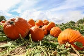 Pumpkin Patch Near Chandler Az by The Best Fall Festivals In Arizona Phoenix Org