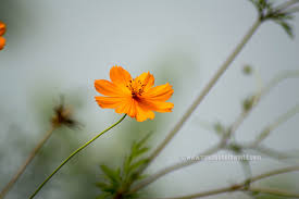 Desktop Outstanding Beautiful Flowers For Mobile Teorg On Flower Wallpaper Hd Full Pics Phones Wallpapers Free