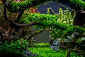 Planted Tank Enchanted Forest By Tommy Vestlie - Aquarium Design ... Aquascape Of The Month June 2015 Himalayan Forest Aquascaping Interesting Driftwood Placement Aquascapes Pinterest About The Greener Side Aquascaping Design Checklist Planted Tank Forum Simons Blog Decoration Bring Nature Inside Home Ideas Downhill By Arie Raditya Aquarium 258232 Aquaria Creating With Earth Water Fire Air Space New Aquascapemarch 13 2016page 14 Page 8 Aquapetzcom Magical Youtube 386 Best Tank Images On Aquascape