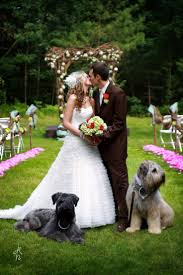 91 Best Dogs In Weddings Images On Pinterest | Wedding Dogs ... Pets As Pilgrims Photos Peoplecom Contra Costa Animal Services Home Facebook 180 Best Dog Of Honor Images On Pinterest Marriage Wedding Dogs Bird 5 Darnick Street Underwood Qld 4119 Indtrialwarehouse For Pet Food Care Accsories Big W 91 Dogs In Weddings Shop Warehouse Buy Supplies Online Petbarn 332 Of Course My The Hooves And Paws Rescue Heartland Inc A Place To Heal