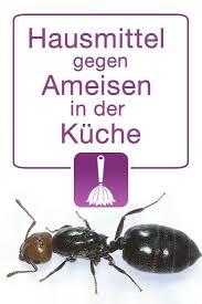 hausmittel gegen ameisen in der küche ameisen in der küche