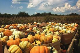 Pumpkin Patch Nashville Area by Your Guide To Local Pumpkin Patches And Farms Williamson Source