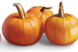 Connecticut Field Pumpkin For Pies by Pumpkin Foodland Ontario