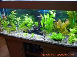 co2 produire et injecter soi même du co2 dans aquarium