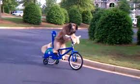 Dog Riding Bike GIFs