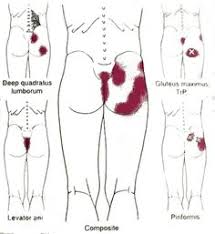 breaking down the parts of the spine spinal cord pinterest