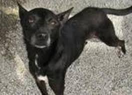 No Shed Dogs Illinois by Adoptable Dogs Benldadoptapet