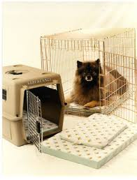 Pet Crate Pad Junior Medium Size