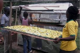 Types Of Pumpkins Grown In Uganda by Preserving Pumpkins To Make More Money Daily Monitor