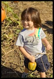 Bishop Pumpkin Farm Hours by Pumpkin Farm U2014 Lenkaland