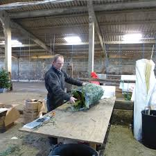 Christmas Tree Saplings For Sale Uk by Gallery Scottish Christmas Trees