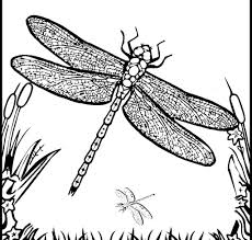 Dragonfly Pictures Coloring Pages Cute Mandala Book Simple Fine