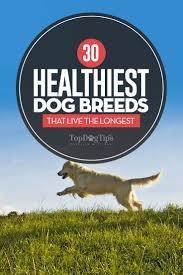 30 Dog Breeds That Shed The Most by Top 30 Smartest Dog Breeds Maconbourgogne