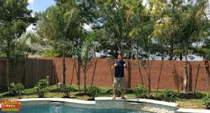 About | Blog | Big Tex Trees Garden Design With Backyard Trees Privacy Yard A Veggie Bed Chicken Coop And Fire Pit You Bet How To Illuminate Your With Landscape Lighting Hgtv Plant Fruit Tree In The Backyard Woodchip Youtube Privacy 10 Best Plants Grow Bob Vila 51 Front Landscaping Ideas Designs A Wonderful Dilemma Ramblings From Desert Plant Shade Digital Jokers Growing Bana Trees In Wearefound Home 25 Potted Ideas On Pinterest Indoor Lemon Tree