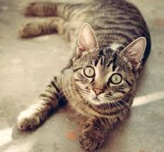 cat dental care cat dental care in tucson az cat hospital of tucson