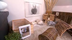 hundkatzemaus diana zeigt kaninchen in wohnungshaltung