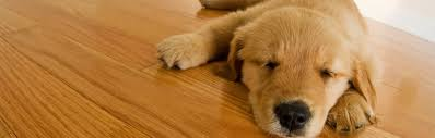 tips for keeping your pet and wood flooring on good terms