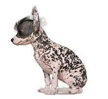 Cute Non Hypoallergenic Dogs by The Best Hypoallergenic Dog Breeds For Allergy Sufferers U2014 Not In