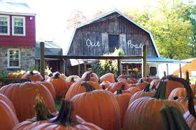 Pumpkin Patch Massachusetts by Outpost Farm Holliston Massachusetts In The Fall With Pumpkins