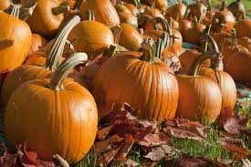 Pumpkin Picking Places In South Jersey by See It Thieves Swipe 200 Pumpkins From New Jersey Farm Stand Ny