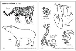 Jungle Rainforest Animals