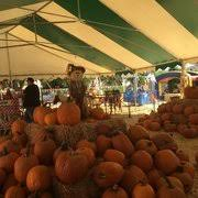 Pumpkin Patch Glendale Co by Tina U0027s Pumpkin Patch 50 Photos U0026 55 Reviews Pumpkin Patches
