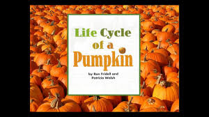 Pumpkin Pumpkin By Jeanne Titherington by The Life Cycle Of A Pumpkin Youtube