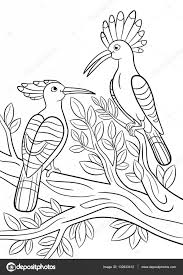 High Quality Free Bird Hoatzin Coloring Books For Kids Printable