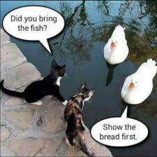lustige bilder witze achtung kommentare werden
