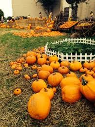 Coconut Grove Pumpkin Patch by Sd Pumpkin Patches Socal To Do Pinterest San Diego And