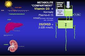 Uvb Lamp Vitamin D3 by Vieth102013webinarppt