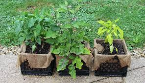A Milk Crate Garden Is Great Way To Grow Lot Of Produce In Small Space Plantable Stackable And Cute Repurposed Crates Gardens