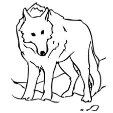 Free Printable Stationary Wolf Coloring Pages