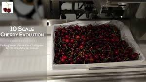 100 Pmc 10 Milbor PMC Scale Cherry Evolution Packing Cherries Into 5